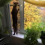 Москитные сетки(антикошка чёрная) в Щёлково